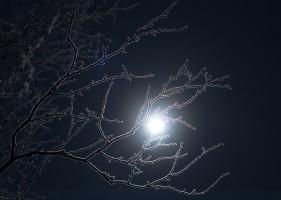 Brindilles au clair de Lune