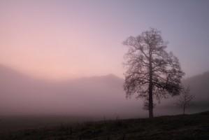 Dans la brume du jour levant