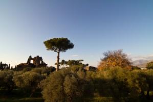 Des oliviers, des ruines, un pin