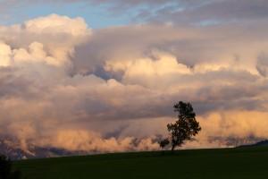 L'arbre des nuages