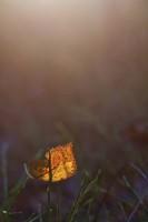Solitude orange