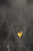 Solitude jaune
