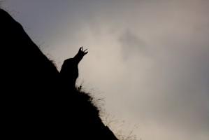 Ombres chamoises